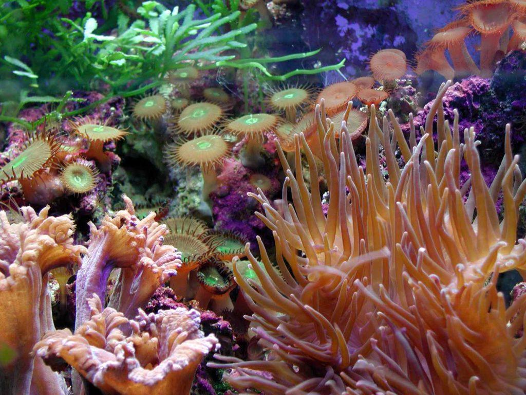Rafy koralowe – przyrodniczy cud świata