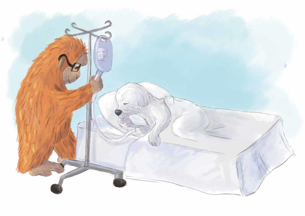 orangutan stawia kroplówkę Urwisowi