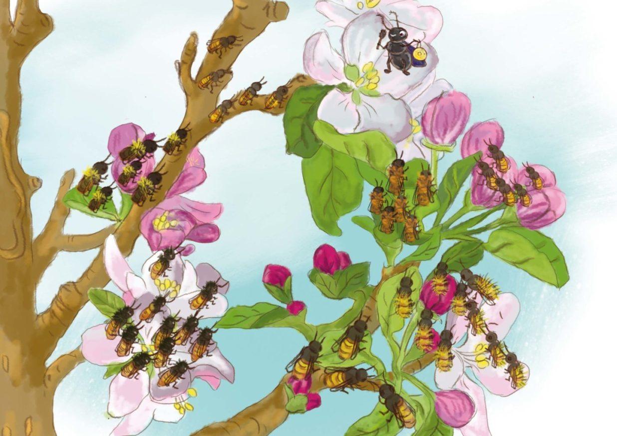 dziesiątki pszczół siedzą na kwiatach jabłoni