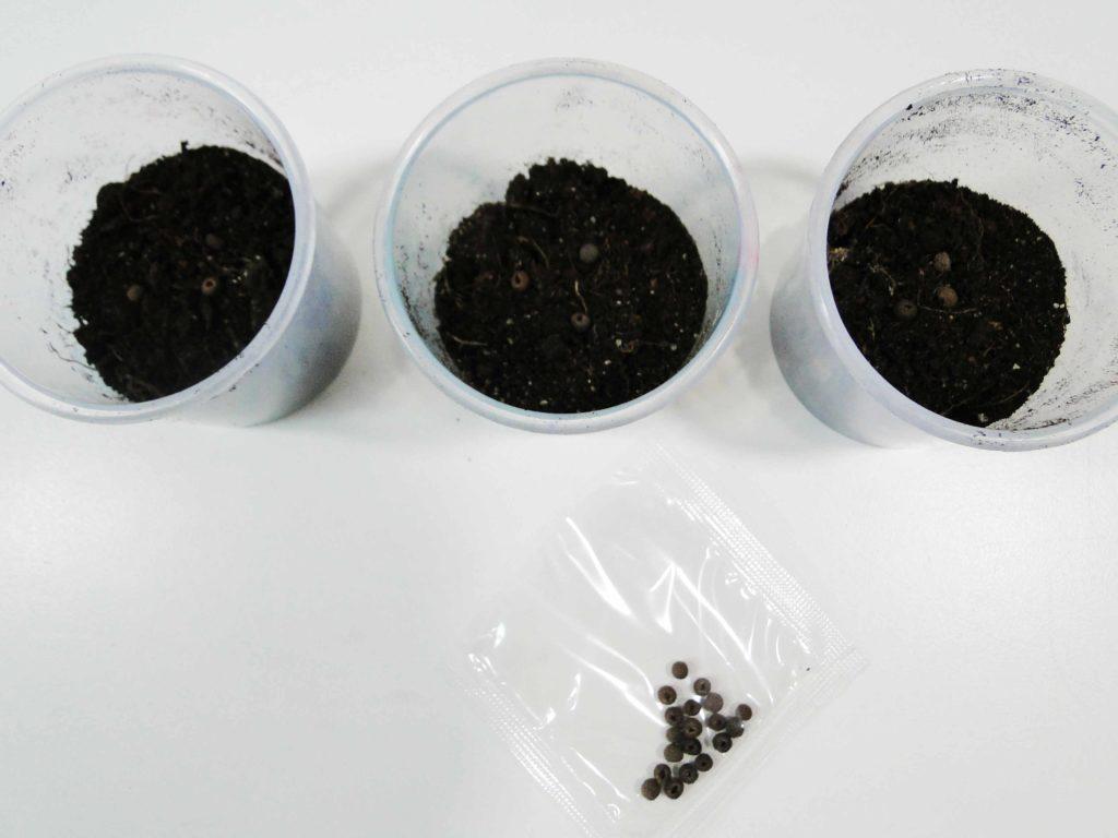 Eksperyment z nasionami