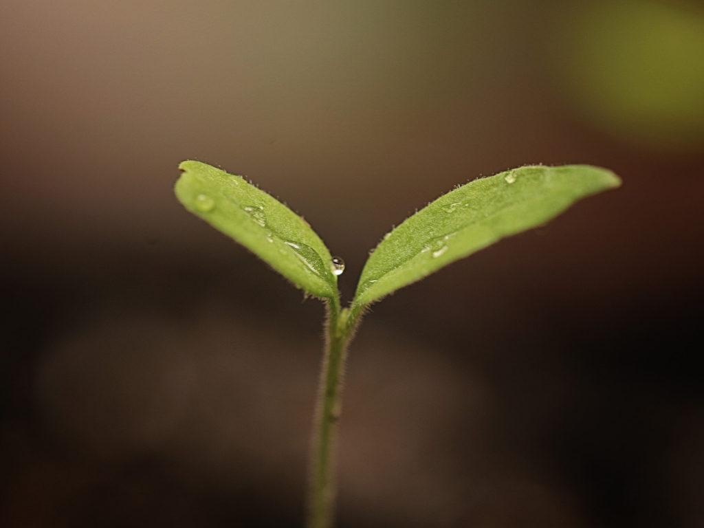 pęd rośliny