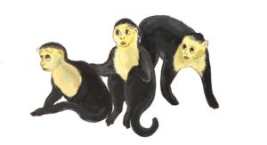 rysunek małpek