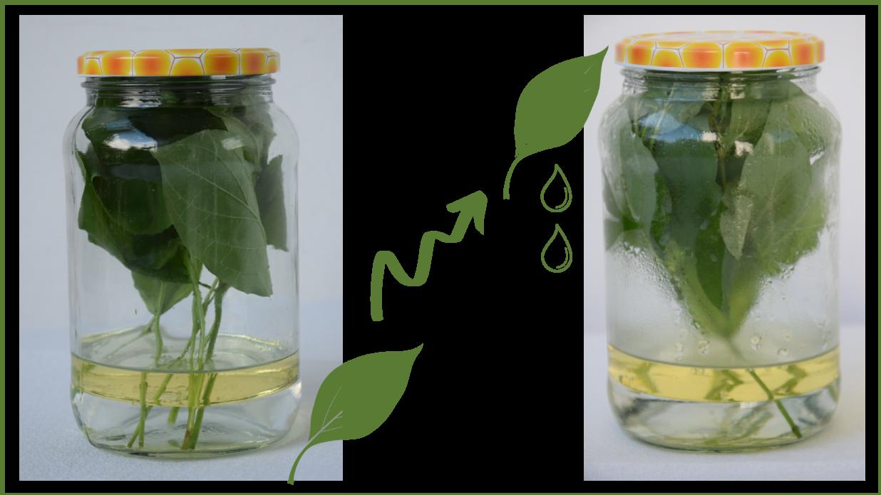słoik z roślinami