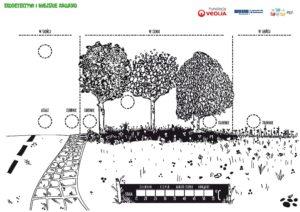 grafika , na której narysowane są trzy drzewa, parkowa alejka i trawa