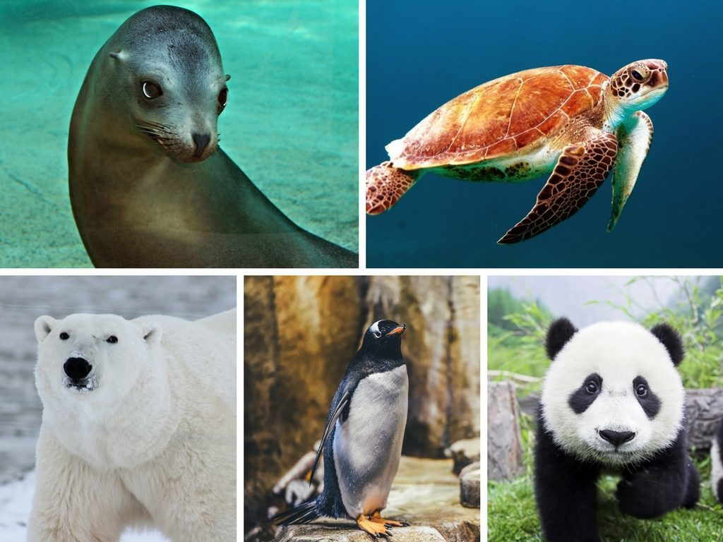 Quiz. Zagrożone gatunki zwierząt