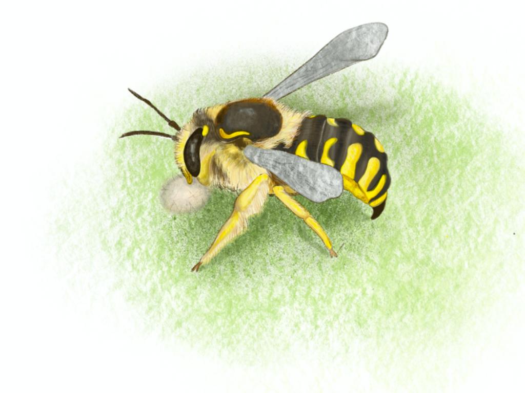 Bee nests