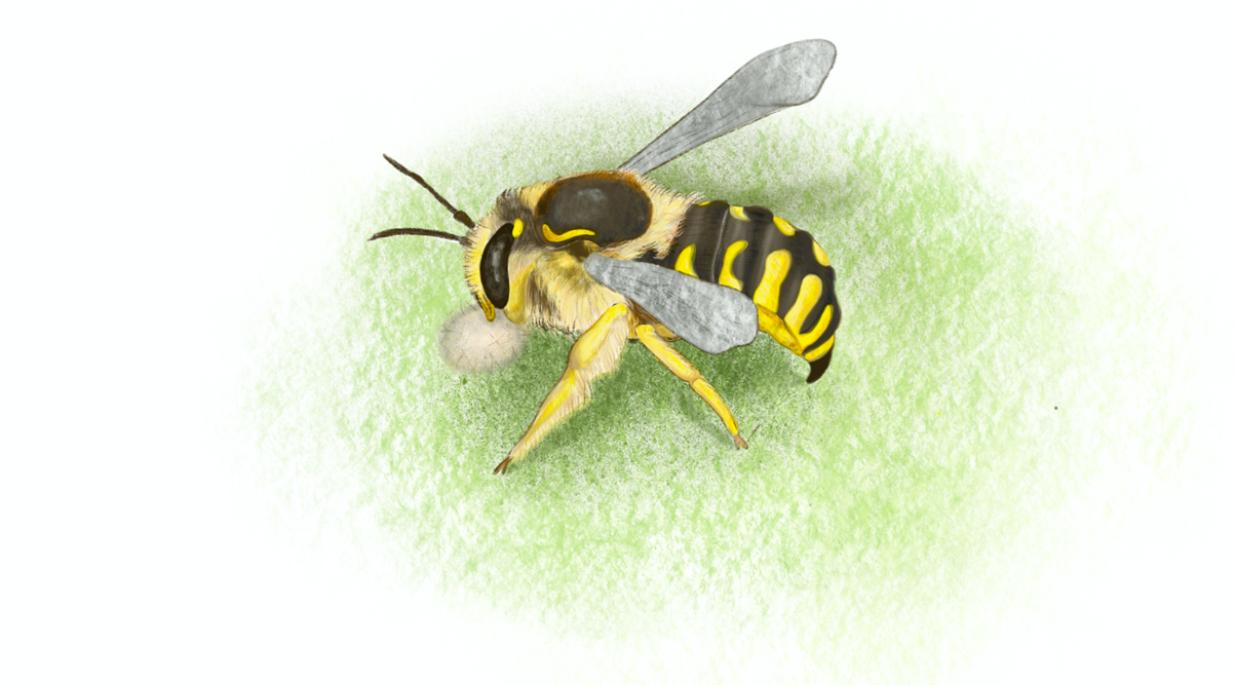 grafika pszczoły siedzącej na liściu