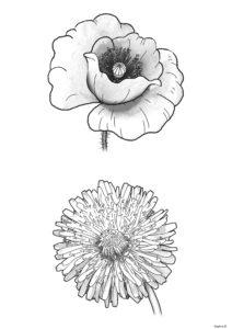 rysunki kwiatów, które rosną na łące