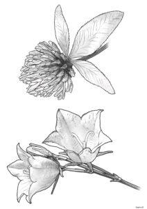 rysunek kwiatów rosnących na łące