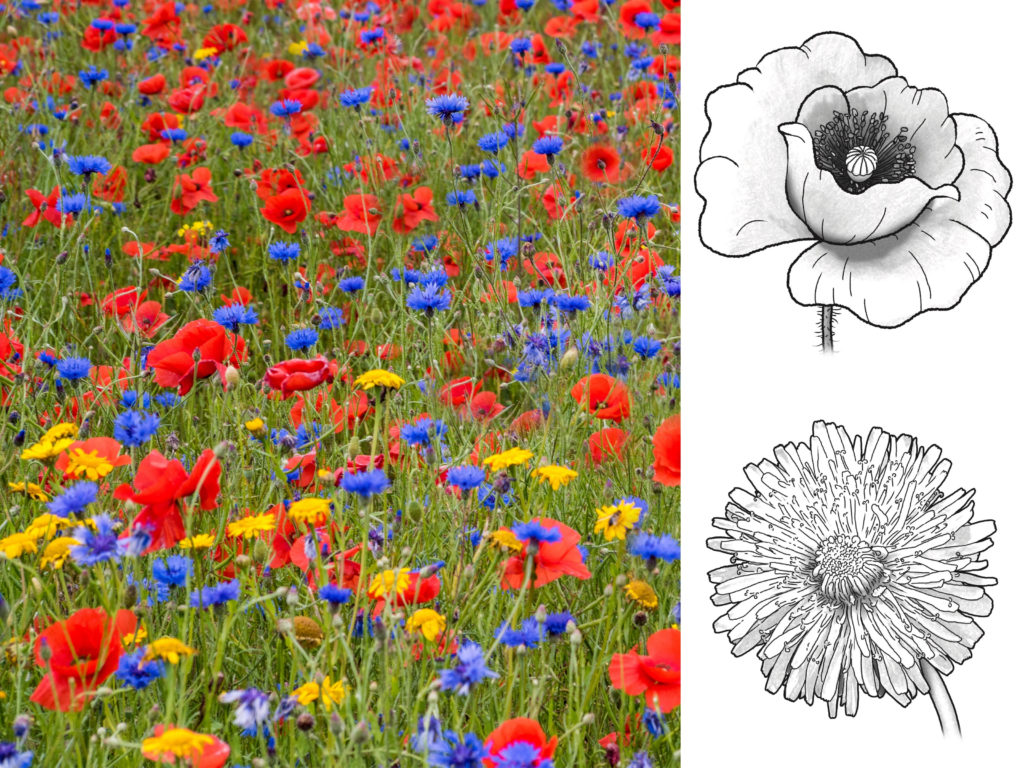 Let's colour the flowers on the meadow