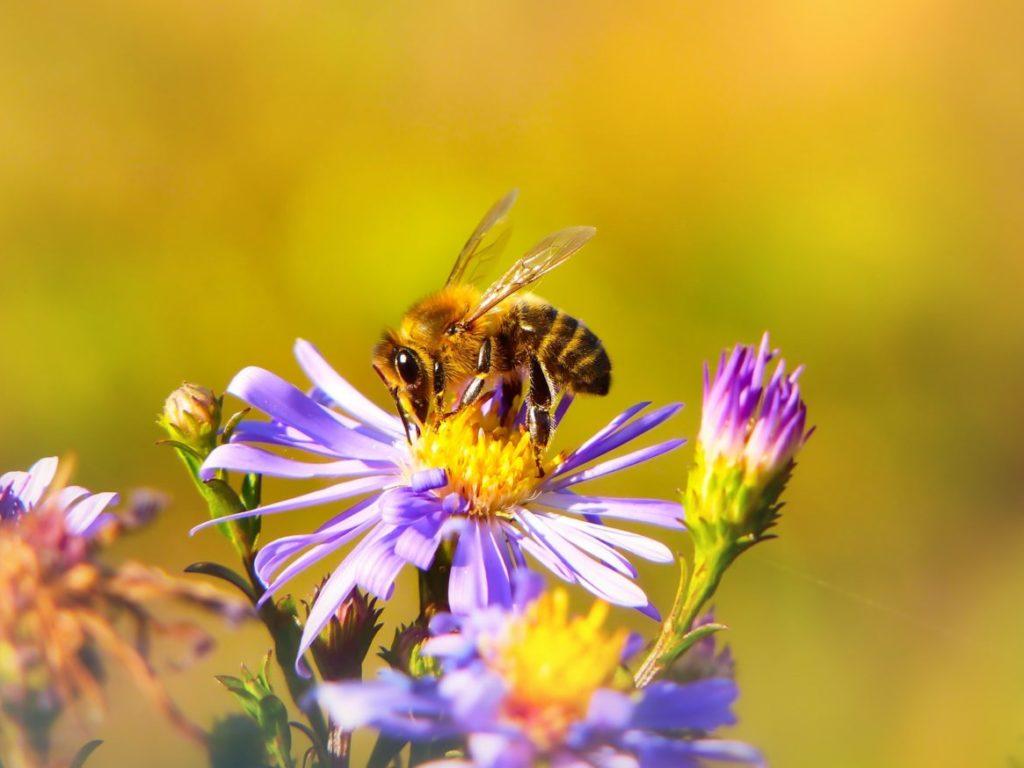 Gra ruchowa o gatunkach pszczół