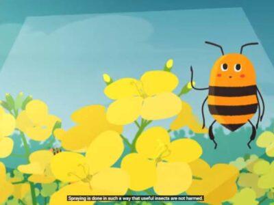 Co w ulu bzyczy… czyli co powinniśmy wiedzieć o pszczołach i owadach zapylających