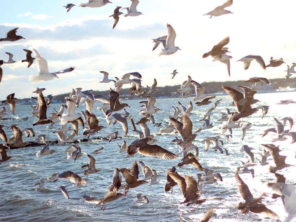 Dźwięki wody i przyrody